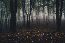 Fototapete - forest with yellow leaves on the ground and fog